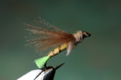 G6 Grayling Sedge